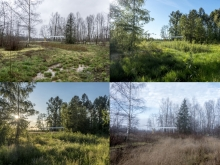 Shelter adjacent to the created wetland. Photo illustrates the change throughout the seasons.