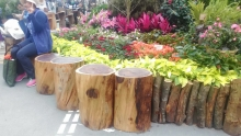 Life Cycle Planning - Wood furniture made by timber from the removal work of senescent Acacia trees