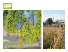 In order to reduce the heat island effect in this highly urbanized and mineralized area, softscapes cover 62% of the site with over 300 trees and 30,000 shrubs and perennials, 52% of which are native. This is 500% increase in biomass.
