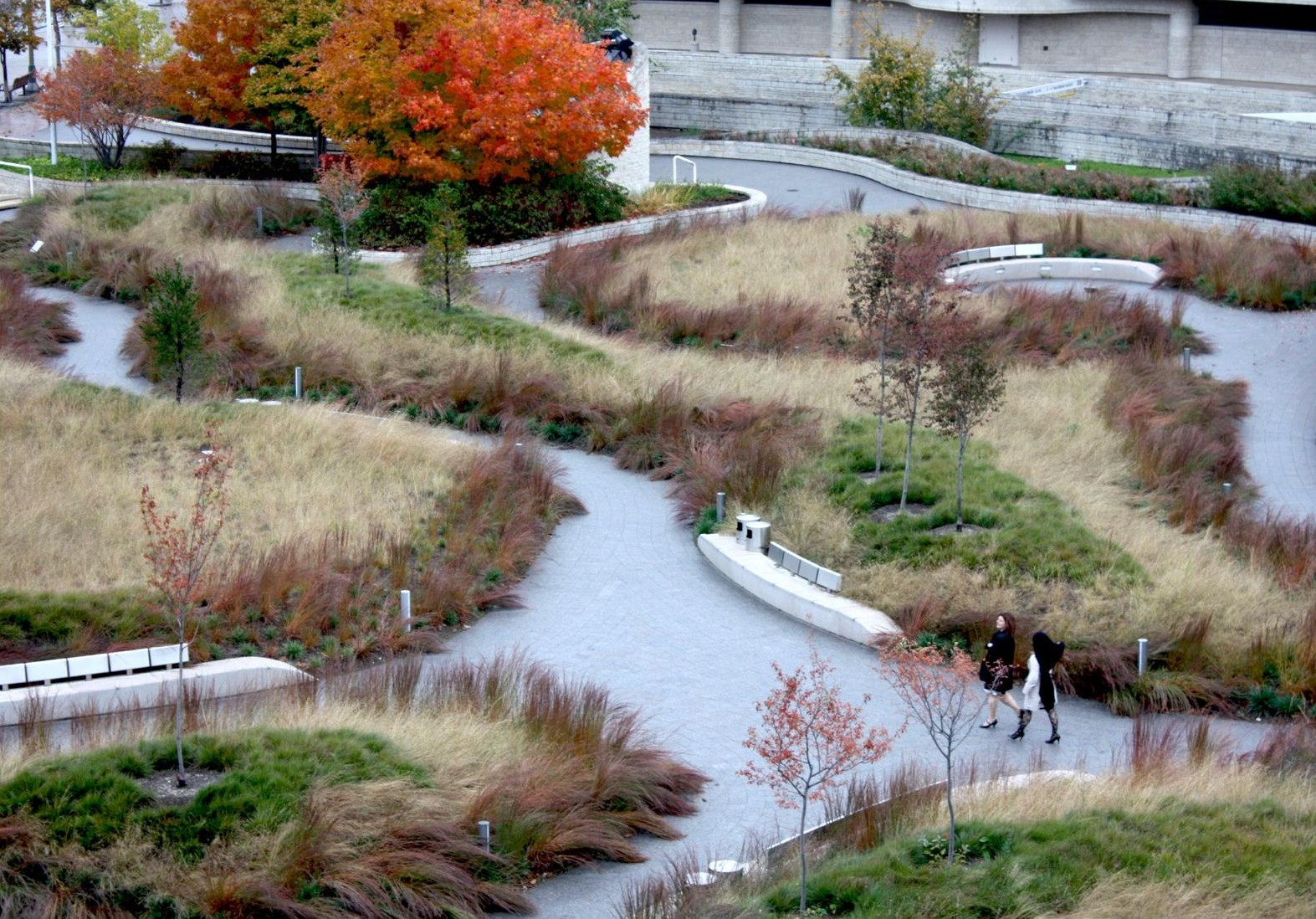 Urban prairie transformation of the plaza from hardscape for Canadian society of landscape architects